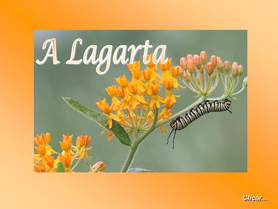 A Lagarta Clicar...