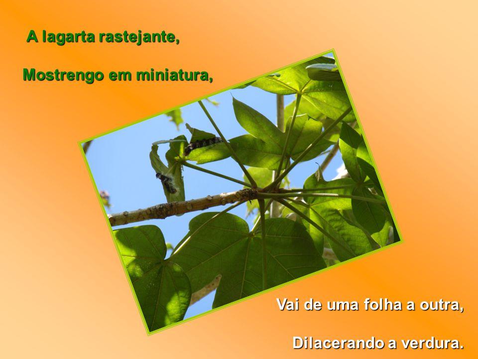 A lagarta rastejante, Mostrengo em miniatura, Vai de uma folha a outra, Dilacerando a verdura.