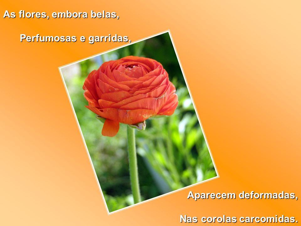 As flores, embora belas, Perfumosas e garridas, Aparecem deformadas, Nas corolas carcomidas.