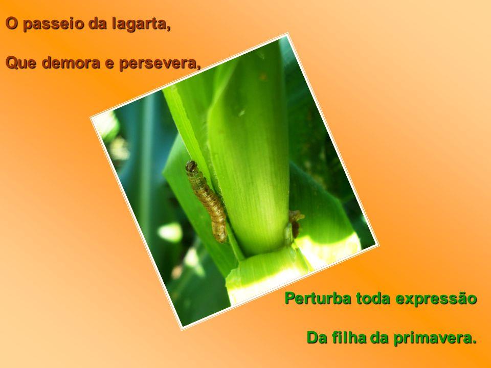 O passeio da lagarta, Que demora e persevera, Perturba toda expressão Da filha da primavera.