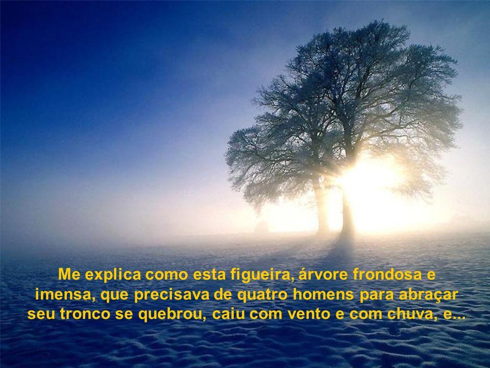 Me explica como esta figueira, árvore frondosa e imensa, que precisava de quatro homens para abraçar seu tronco se quebrou, caiu com vento e com chuva, e...