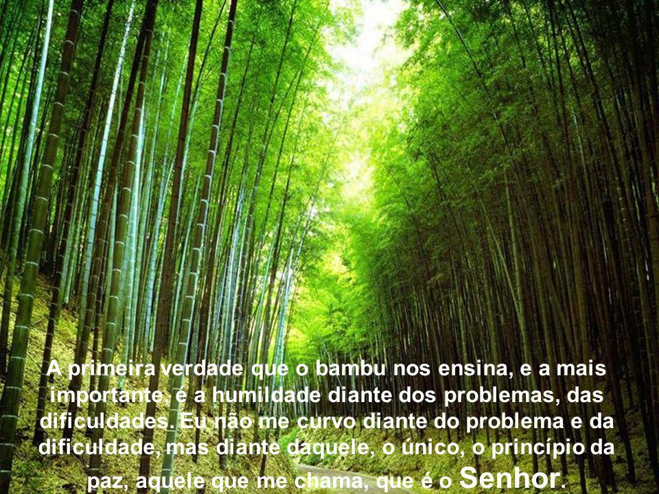 A primeira verdade que o bambu nos ensina, e a mais importante, é a humildade diante dos problemas, das dificuldades.