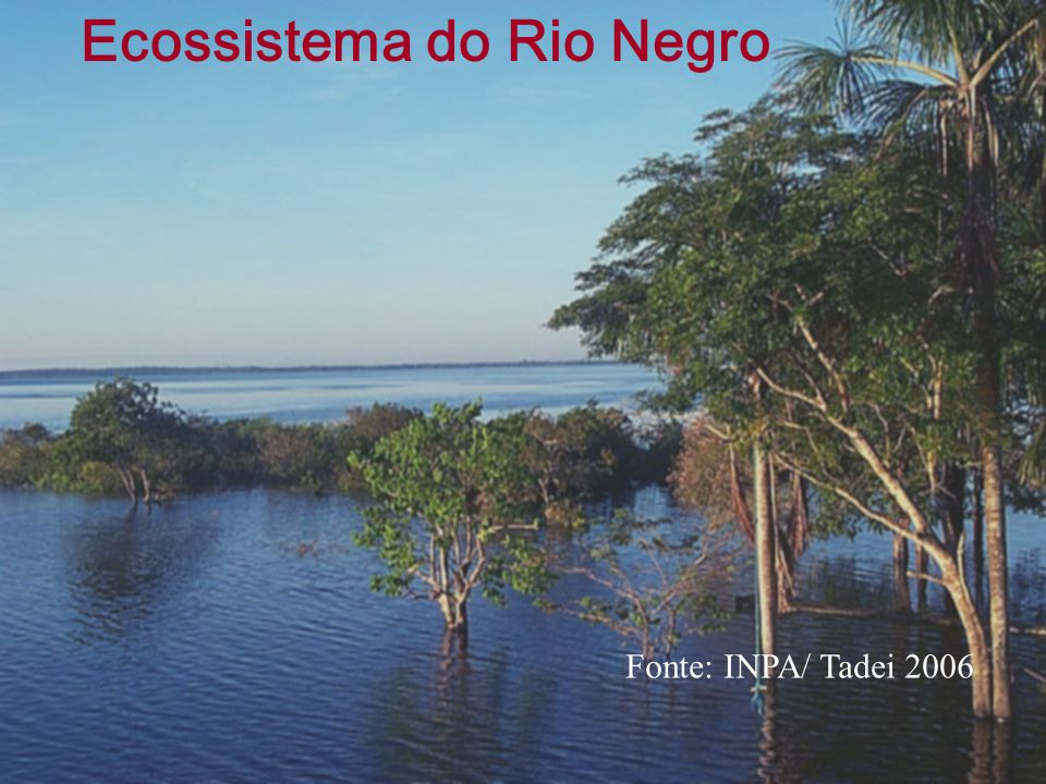 Ecossistema do Rio Negro