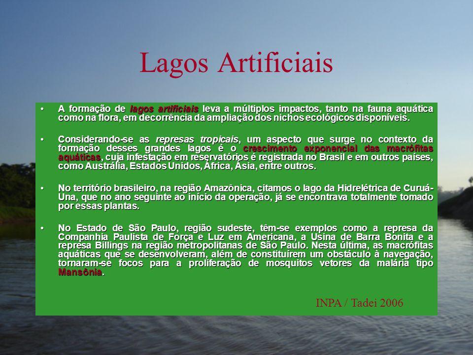 Lagos Artificiais INPA / Tadei 2006