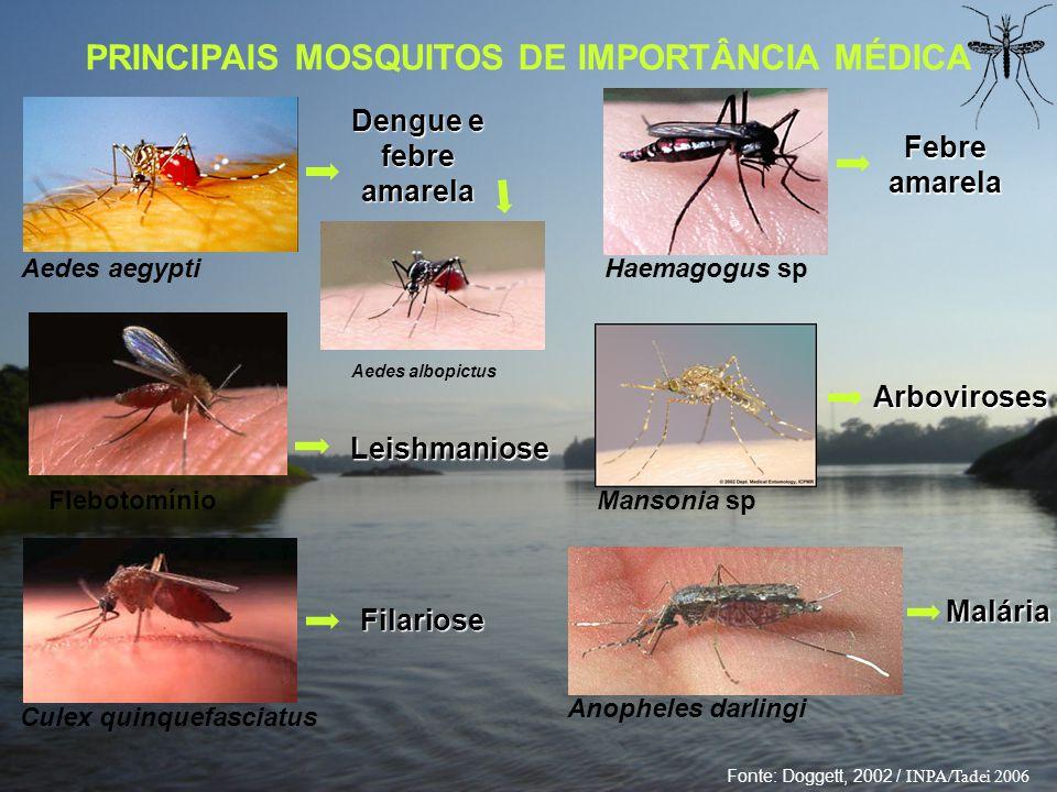 PRINCIPAIS MOSQUITOS DE IMPORTÂNCIA MÉDICA Culex quinquefasciatus