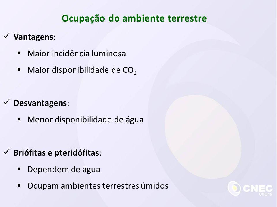 Ocupação do ambiente terrestre