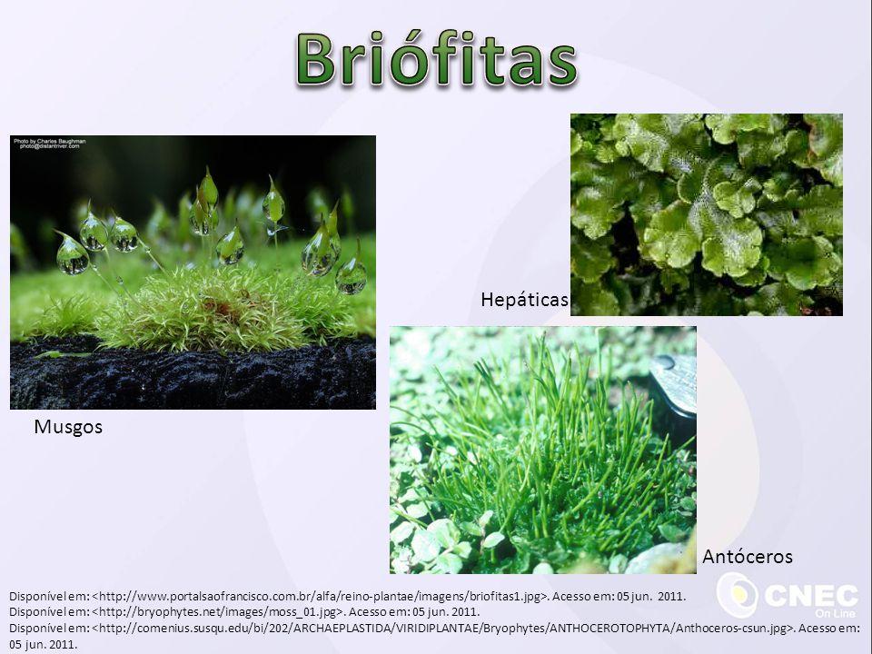 Briófitas Hepáticas Musgos Antóceros