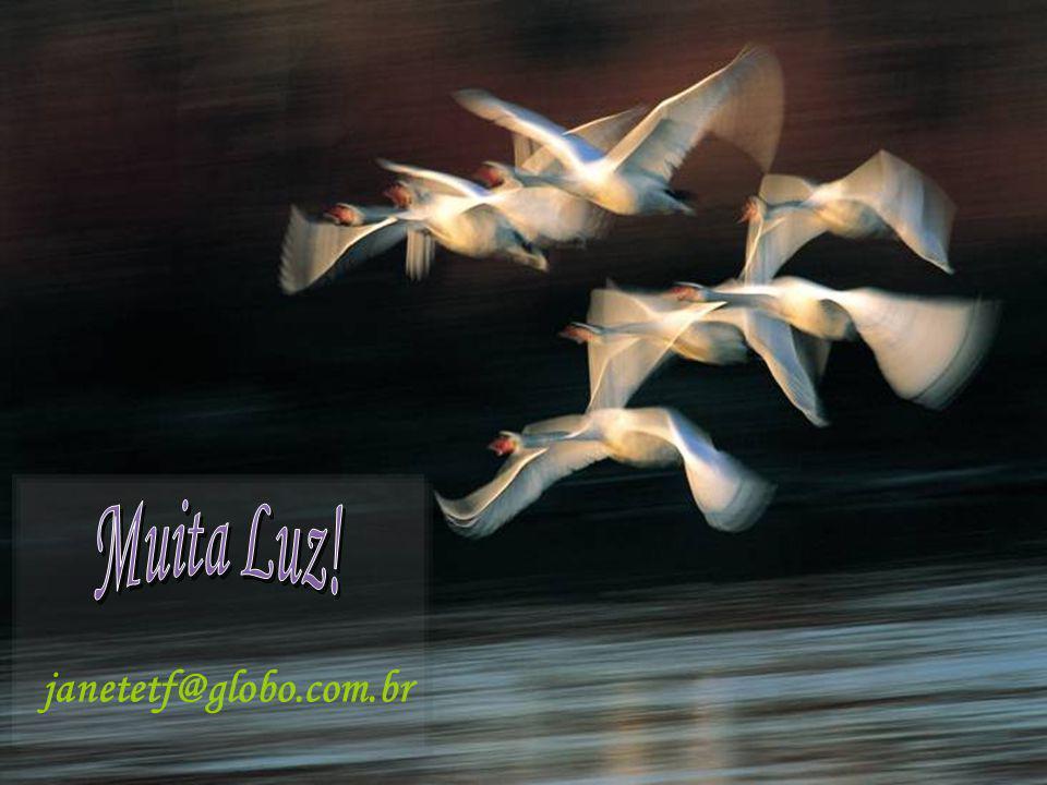 janetetf@globo.com.br Muita Luz! 19