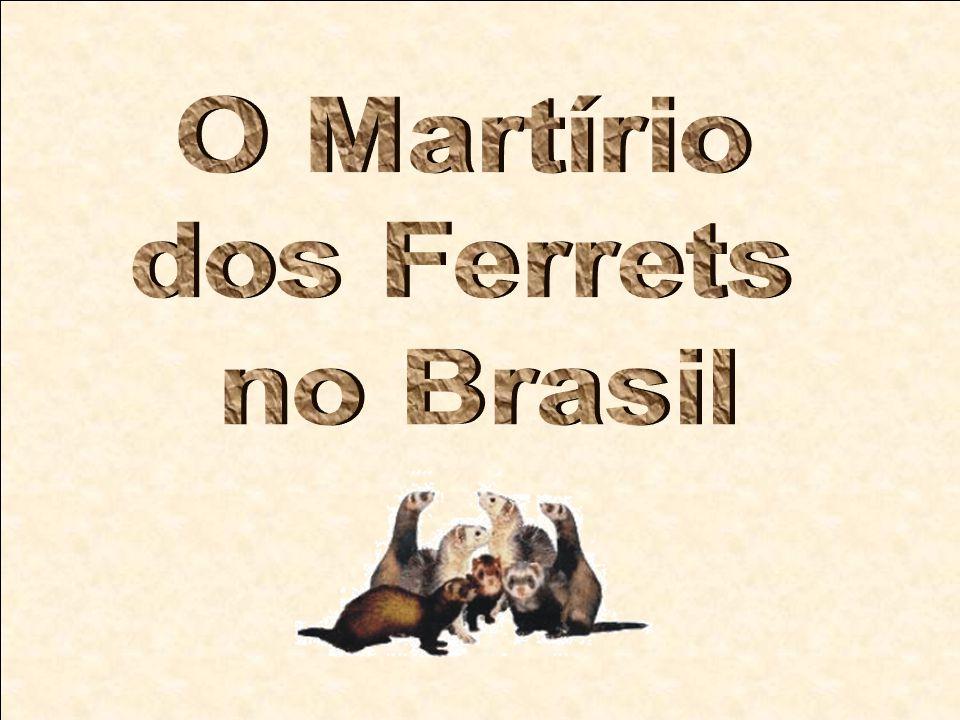 O Martírio dos Ferrets no Brasil