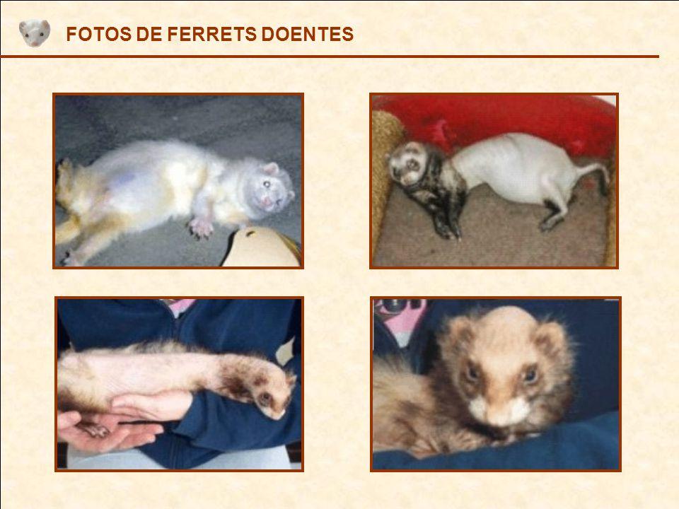 FOTOS DE FERRETS DOENTES