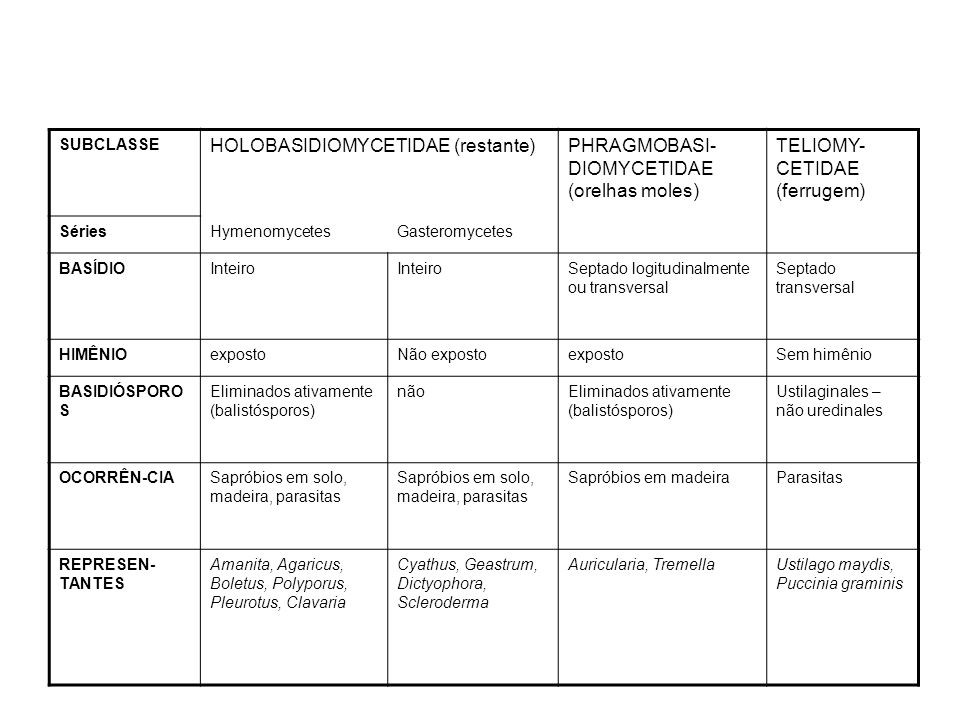 HOLOBASIDIOMYCETIDAE (restante)