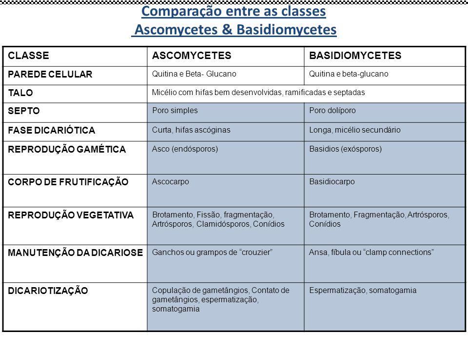 Comparação entre as classes Ascomycetes & Basidiomycetes