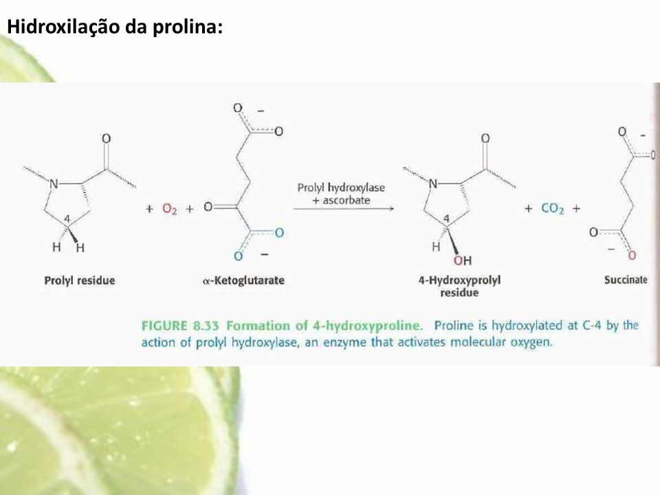 Hidroxilação da prolina: