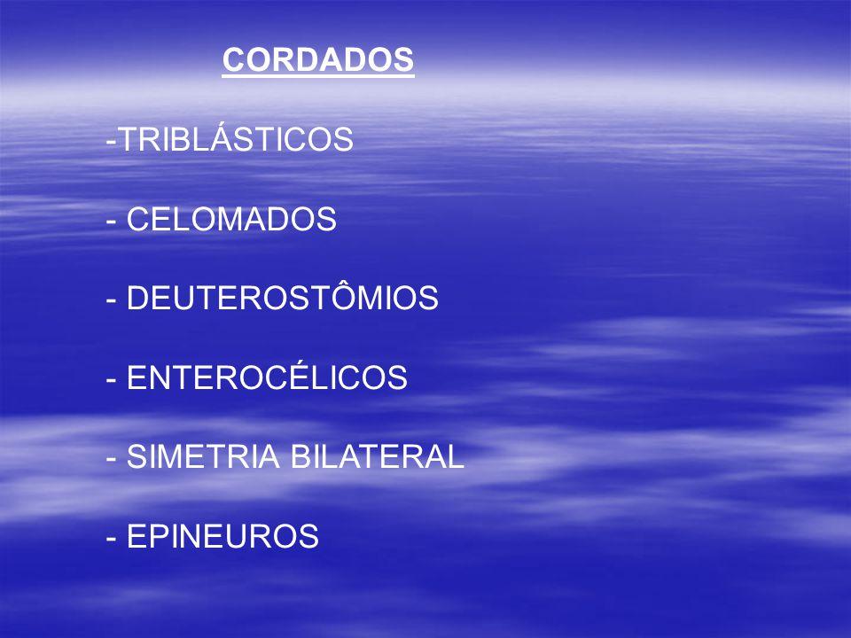 CORDADOS TRIBLÁSTICOS CELOMADOS DEUTEROSTÔMIOS ENTEROCÉLICOS SIMETRIA BILATERAL EPINEUROS