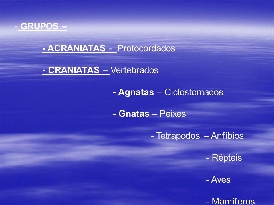 GRUPOS – - ACRANIATAS - Protocordados. - CRANIATAS – Vertebrados. - Agnatas – Ciclostomados. - Gnatas – Peixes.