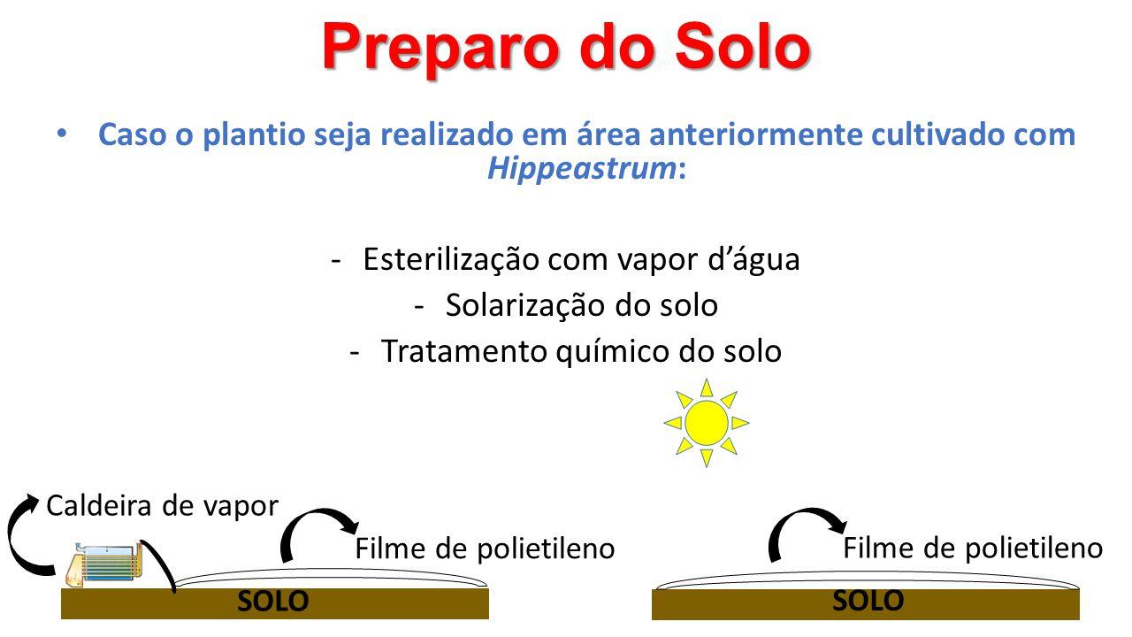 Preparo do Solo Caso o plantio seja realizado em área anteriormente cultivado com Hippeastrum: Esterilização com vapor d'água.