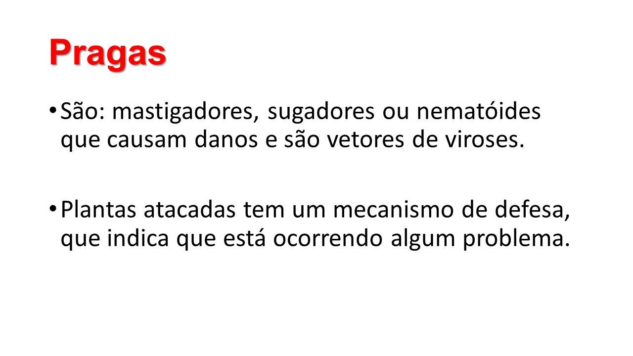 Pragas São: mastigadores, sugadores ou nematóides que causam danos e são vetores de viroses.