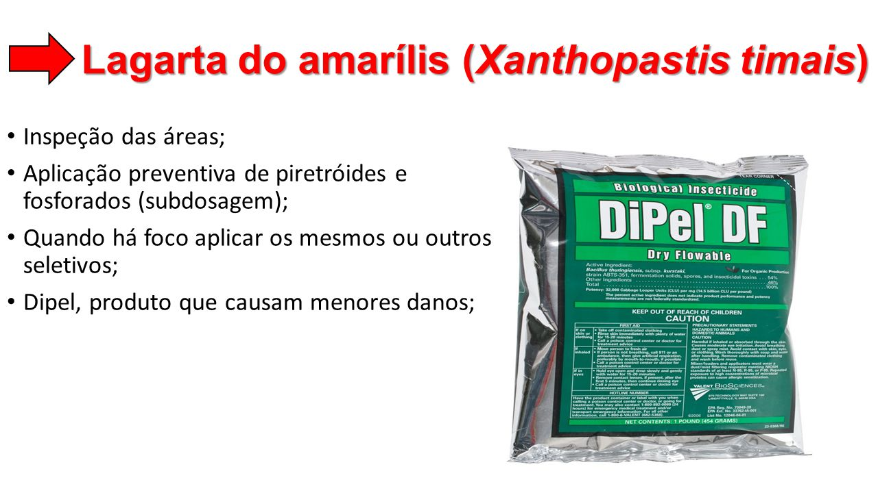 Lagarta do amarílis (Xanthopastis timais)