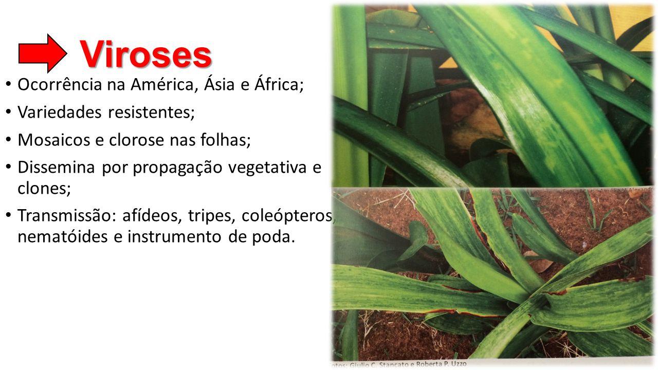 Viroses Ocorrência na América, Ásia e África; Variedades resistentes;