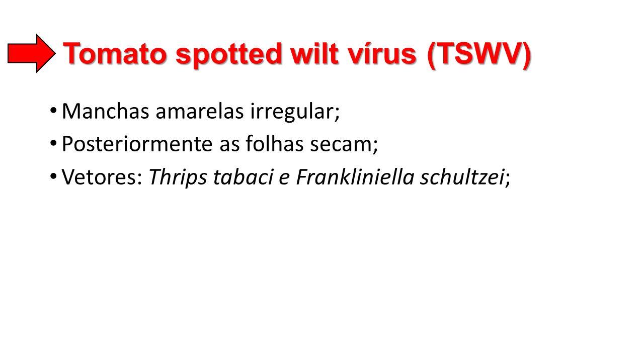 Tomato spotted wilt vírus (TSWV)