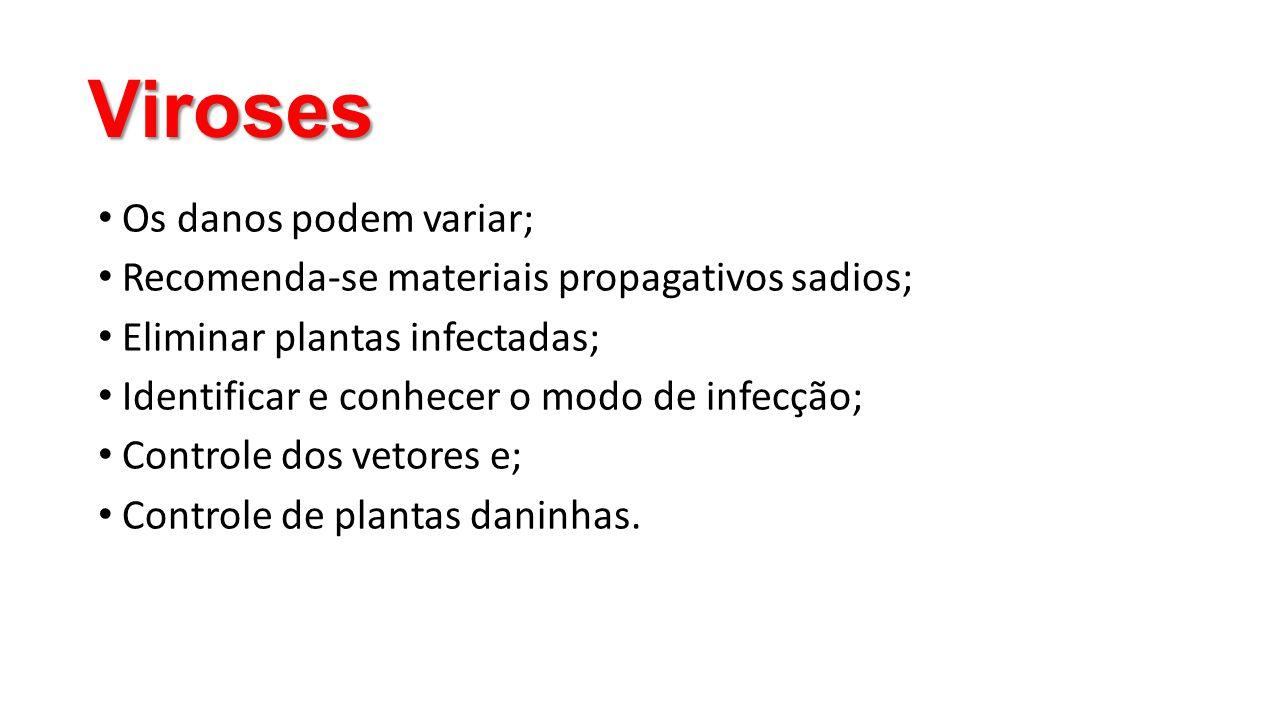Viroses Os danos podem variar;