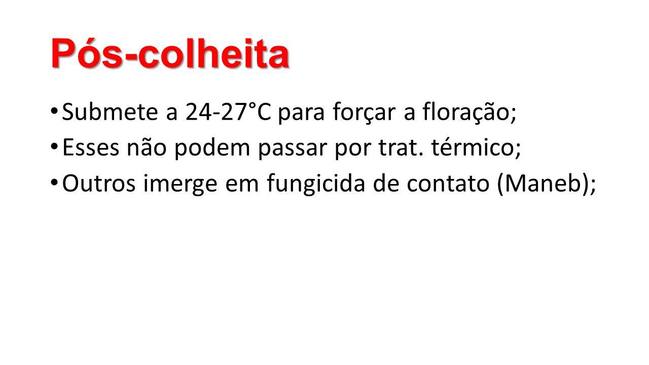 Pós-colheita Submete a 24-27°C para forçar a floração;