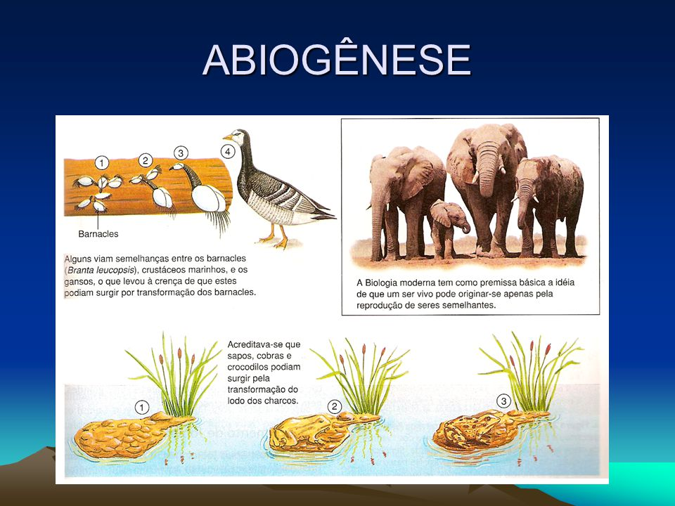 ABIOGÊNESE