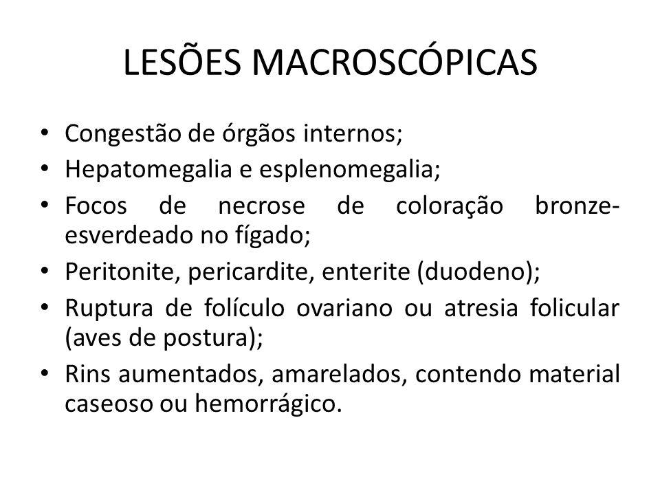 LESÕES MACROSCÓPICAS Congestão de órgãos internos;