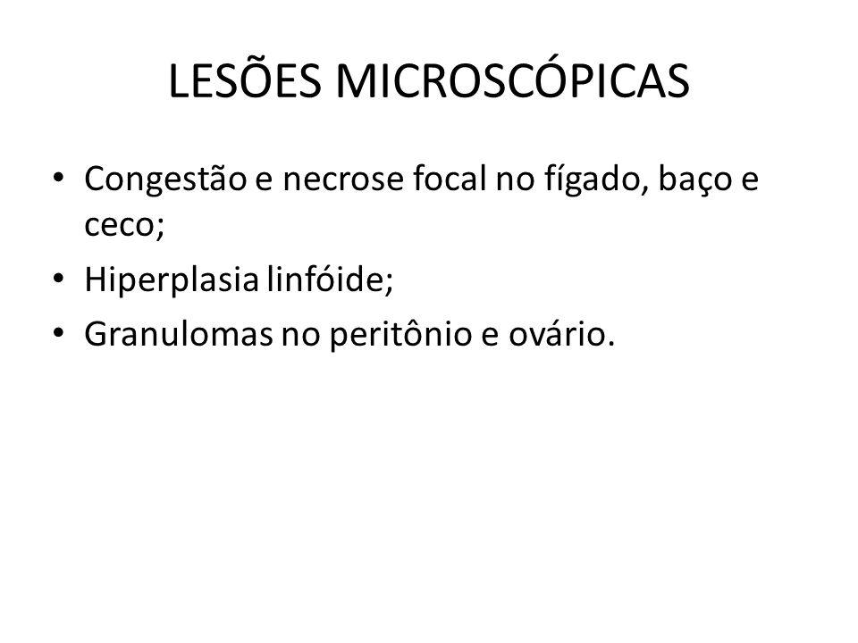 LESÕES MICROSCÓPICAS Congestão e necrose focal no fígado, baço e ceco;