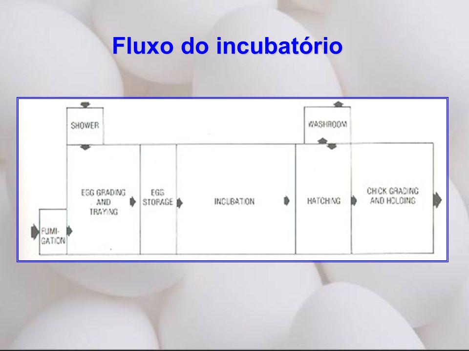 Fluxo do incubatório