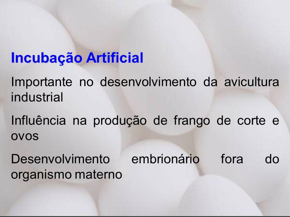 Incubação Artificial Importante no desenvolvimento da avicultura industrial. Influência na produção de frango de corte e ovos.