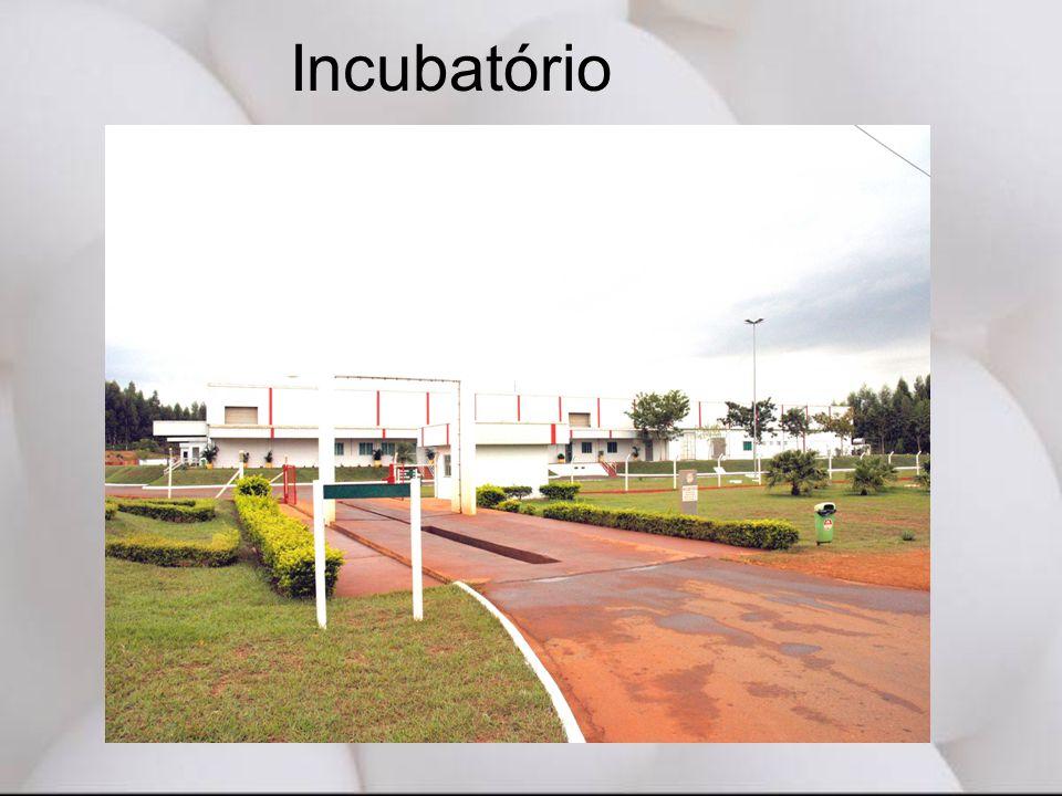 Incubatório