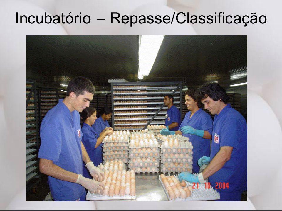Incubatório – Repasse/Classificação