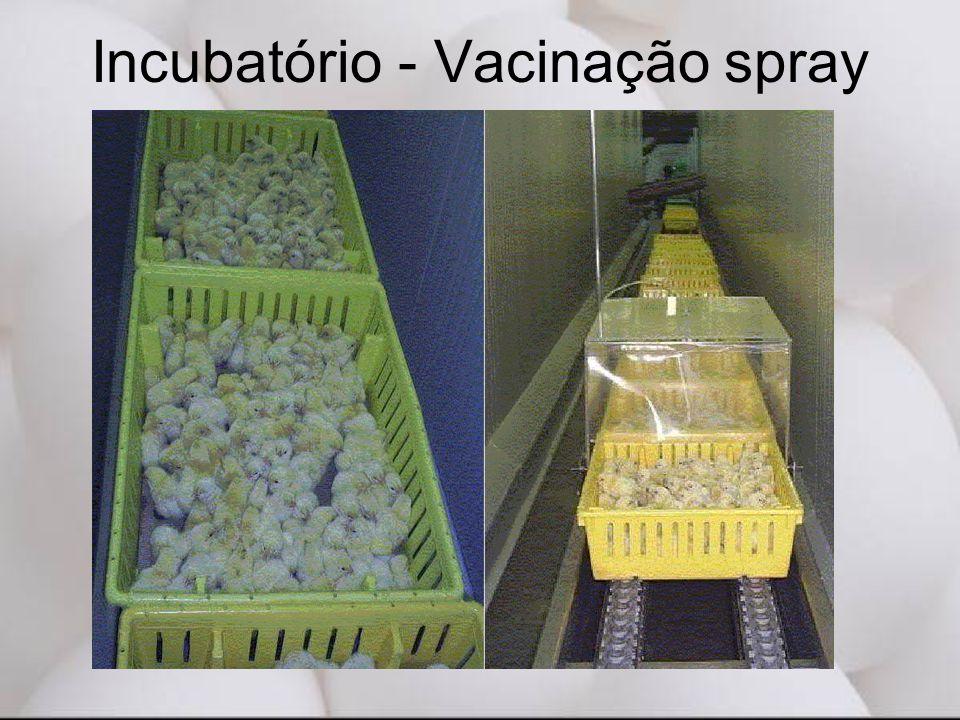Incubatório - Vacinação spray
