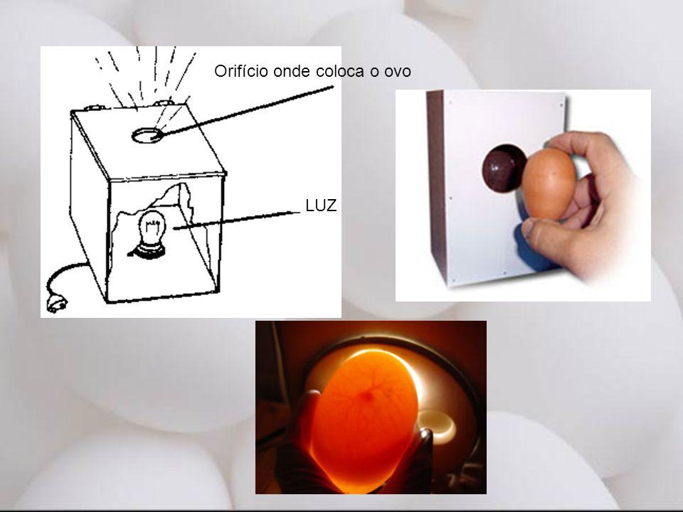 Orifício onde coloca o ovo