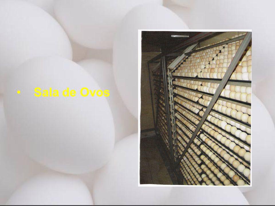 Sala de Ovos Ovos devem ser recolhidos dos galpões e enviados para o incubatorio no mínimo duas.