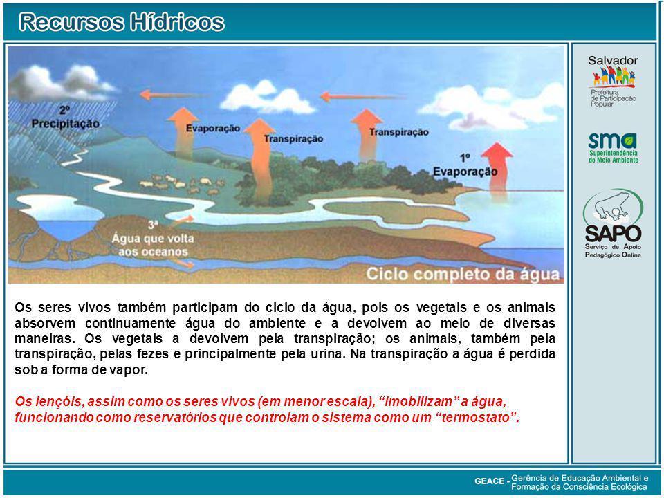 O Ciclo da Água (cont.)