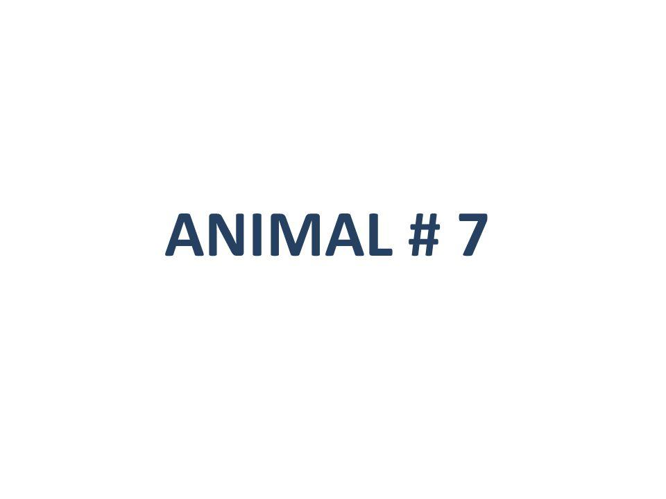 ANIMAL # 7