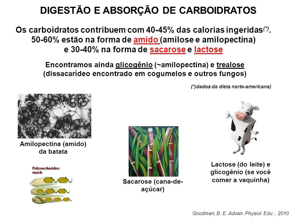 DIGESTÃO E ABSORÇÃO DE CARBOIDRATOS