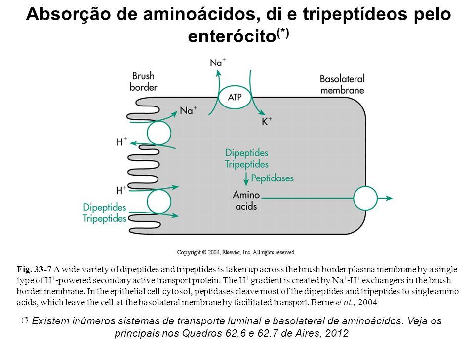 Absorção de aminoácidos, di e tripeptídeos pelo enterócito(*)