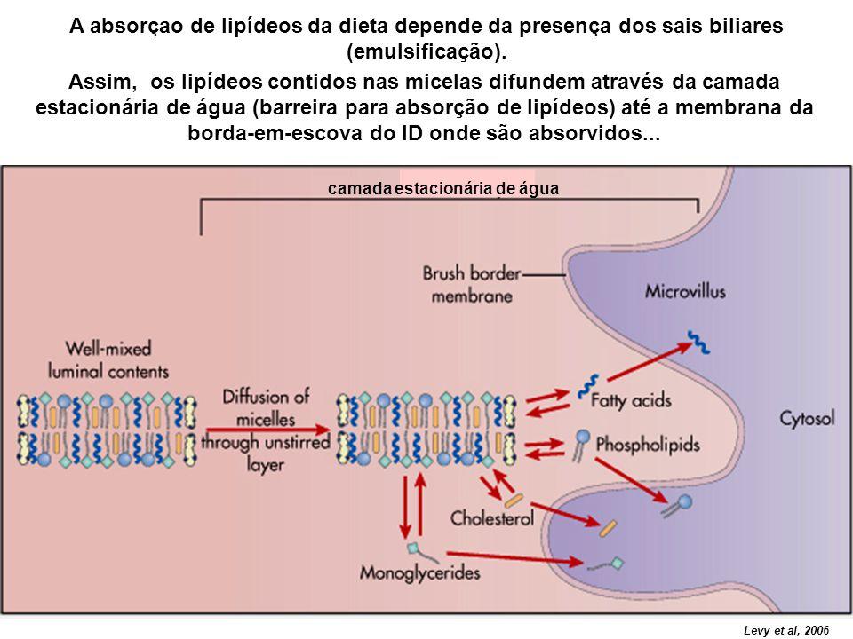 A absorçao de lipídeos da dieta depende da presença dos sais biliares (emulsificação).