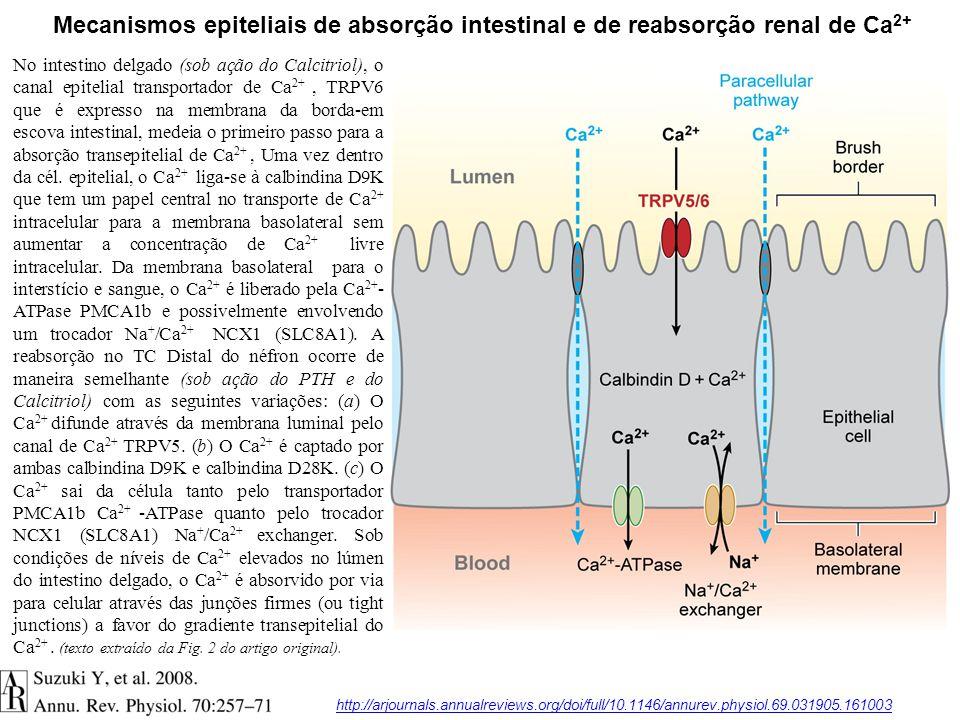 Mecanismos epiteliais de absorção intestinal e de reabsorção renal de Ca2+
