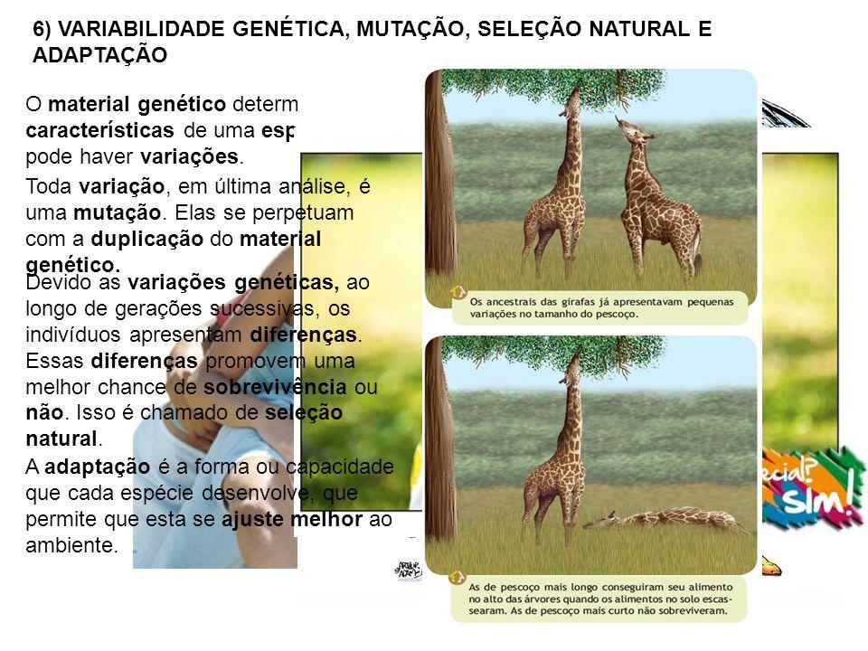 6) VARIABILIDADE GENÉTICA, MUTAÇÃO, SELEÇÃO NATURAL E ADAPTAÇÃO