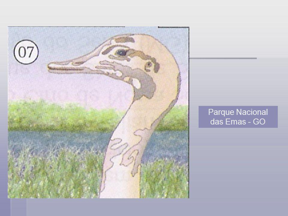 Parque Nacional das Emas - GO