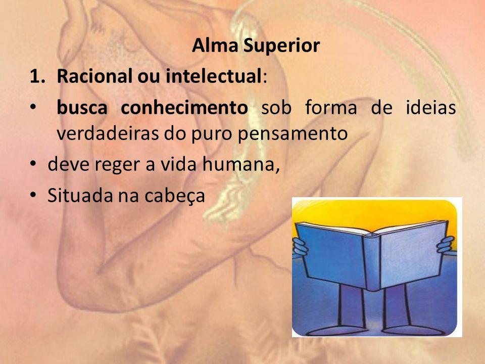 Alma Superior Racional ou intelectual: busca conhecimento sob forma de ideias verdadeiras do puro pensamento.