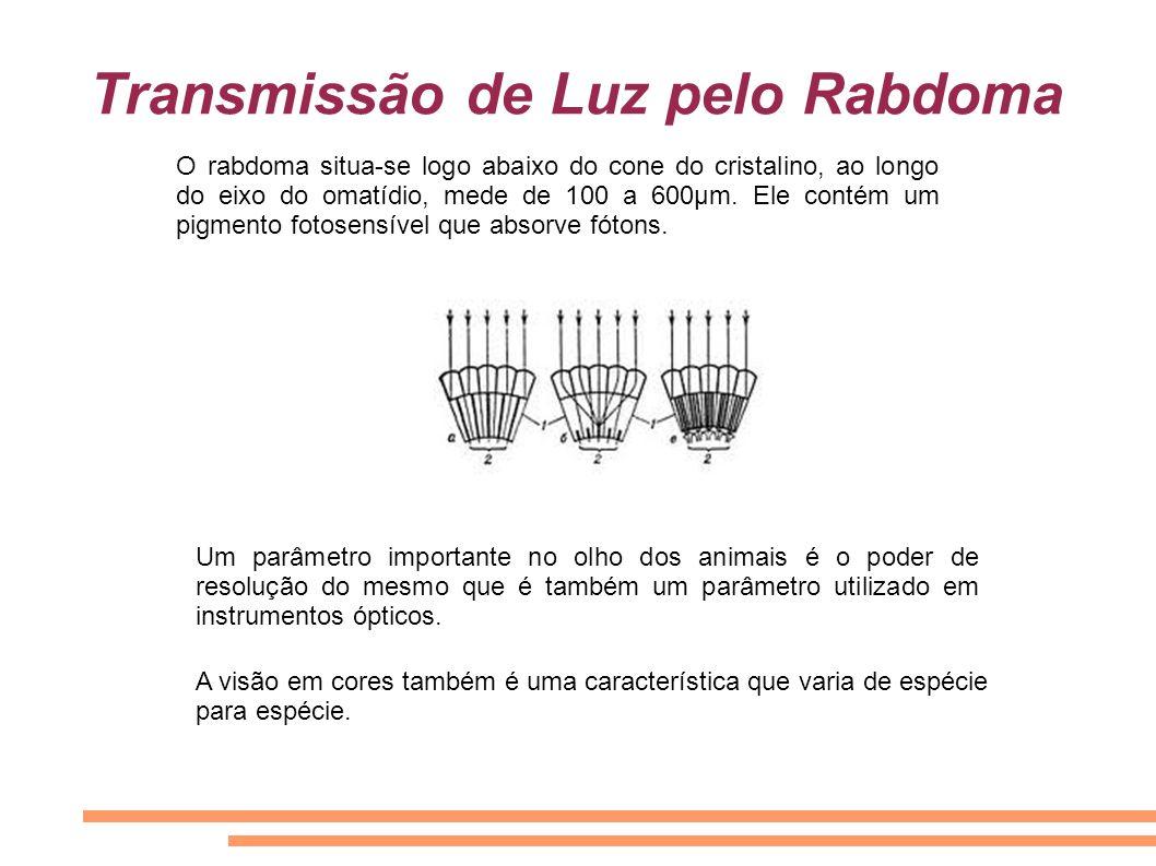 Transmissão de Luz pelo Rabdoma