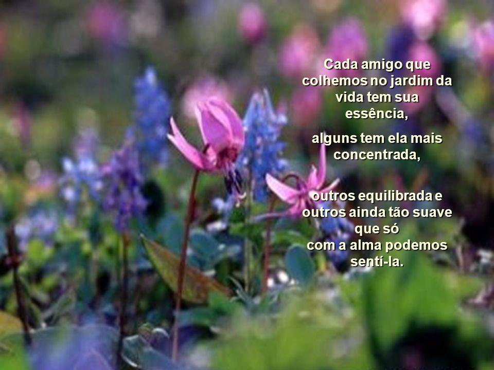 Cada amigo que colhemos no jardim da vida tem sua essência,