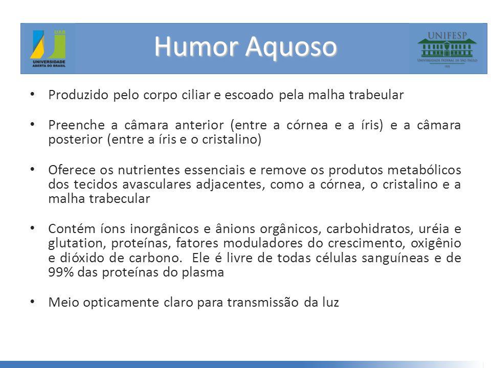 Humor Aquoso Produzido pelo corpo ciliar e escoado pela malha trabeular.