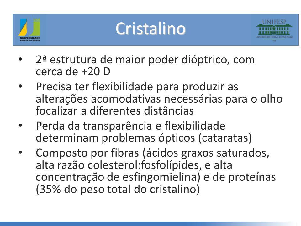 Cristalino 2ª estrutura de maior poder dióptrico, com cerca de +20 D