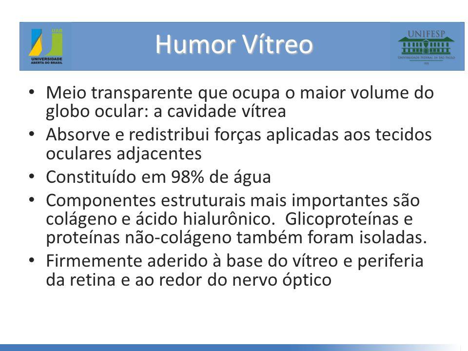 Humor Vítreo Meio transparente que ocupa o maior volume do globo ocular: a cavidade vítrea.
